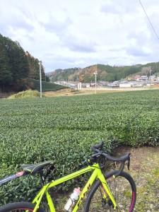 LOKO茶畑