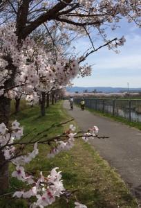 LOKO桜づつみ回廊
